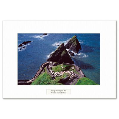 Visions Of Ireland Mounted Prints - Sheep At Dunquin Pier  County Kerry