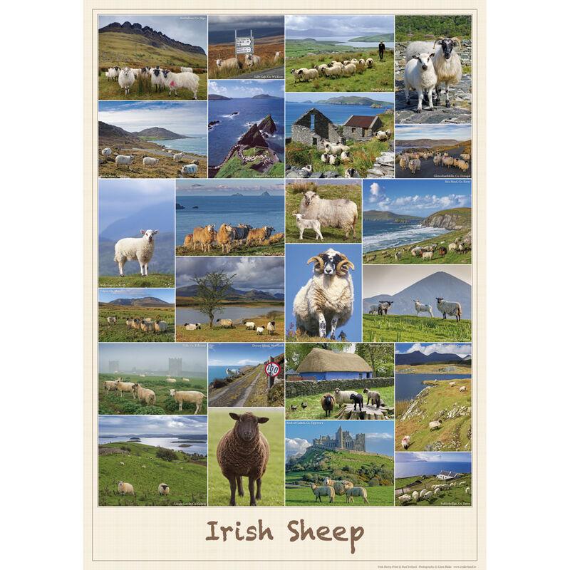 Irish Sheep Poster